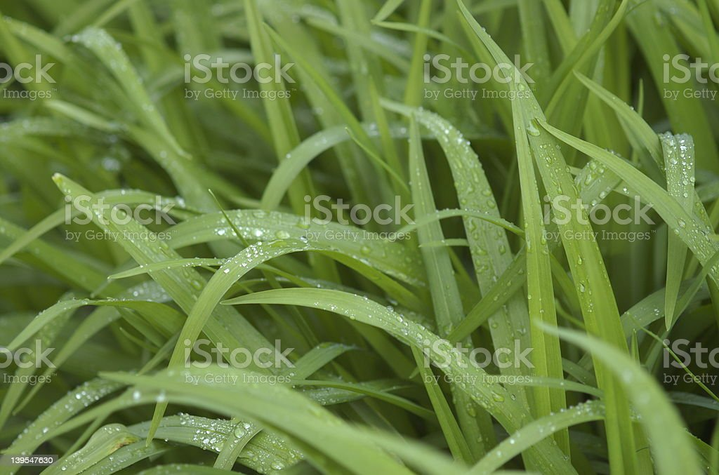 wet thick grass stock photo