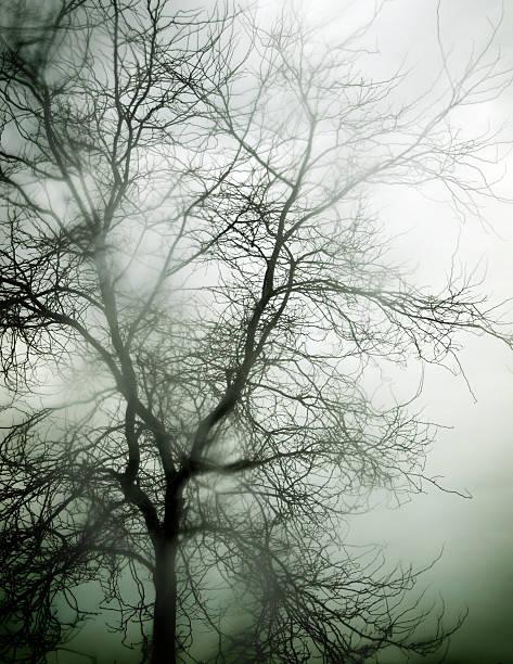 Nass-Baum – Foto