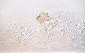 wet wall white