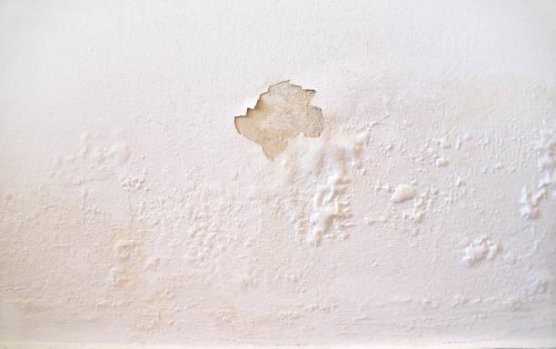 Wet wall white picture id1012426344?b=1&k=6&m=1012426344&s=612x612&w=0&h=qzylqhjx7emwj zh5db 2qsalqomc n2olufnh26eyq=