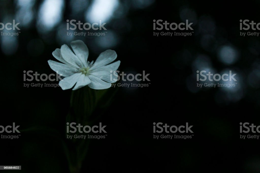 Wet white flower - Royalty-free Beauty Stock Photo