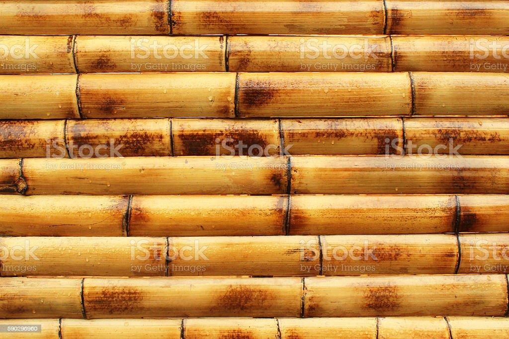 Wet yellow bamboo wall background Стоковые фото Стоковая фотография
