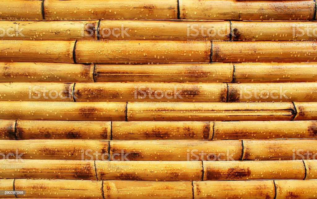 Wet yellow bamboo wall background royaltyfri bildbanksbilder