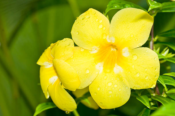 Wet yellow flower stock photo
