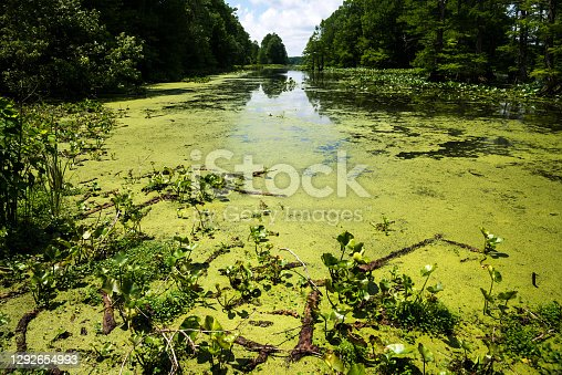 Wetland and swamp with trees and plants.  River provides canoeing area.