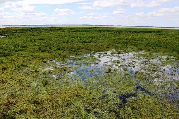 Wetland area of naturereserve Hornborgasjöns in Sweden at summertime, Scandinavia stock photo