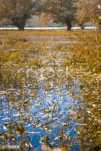Danube wetlands at autumn.