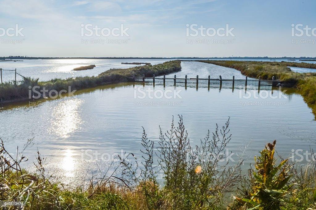 wetland at the po delta - italy stock photo