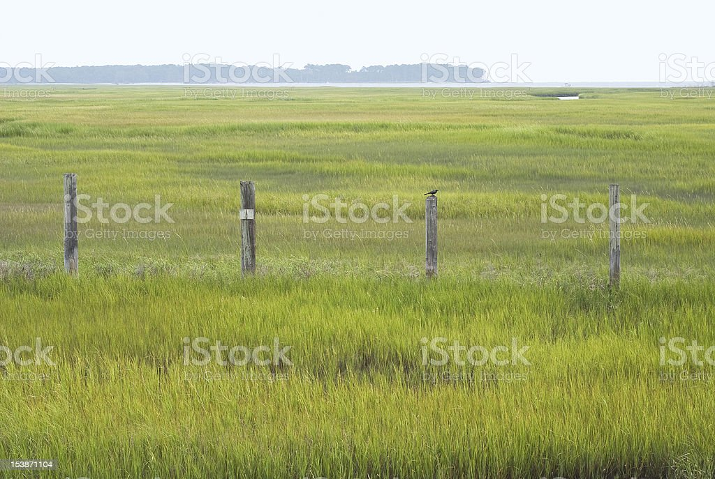 Wetland Conservation in Virginia royalty-free stock photo