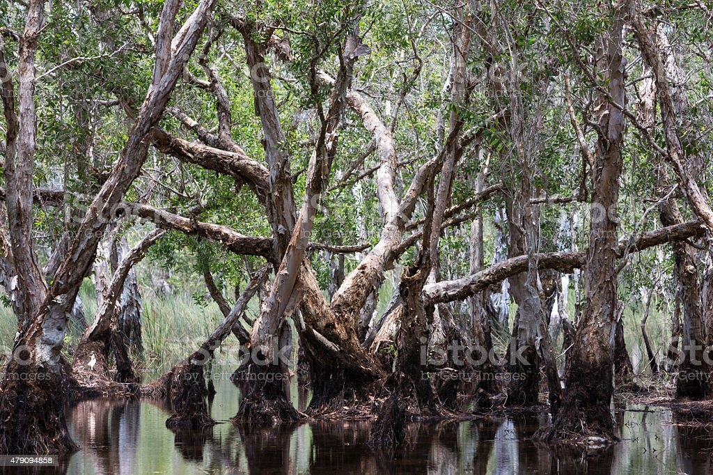 Wetland forest stock photo