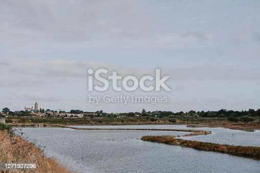 wetland from noirmoutier Island with wild plants