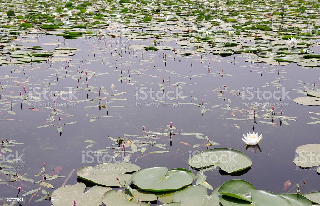Wetland stock photo