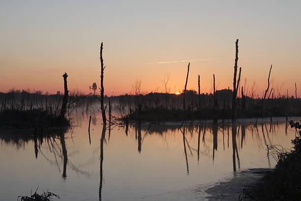 Wetland – Foto