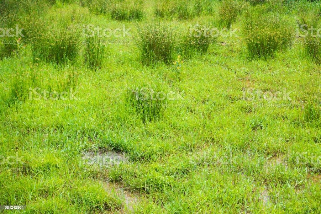 Zone humide photo libre de droits
