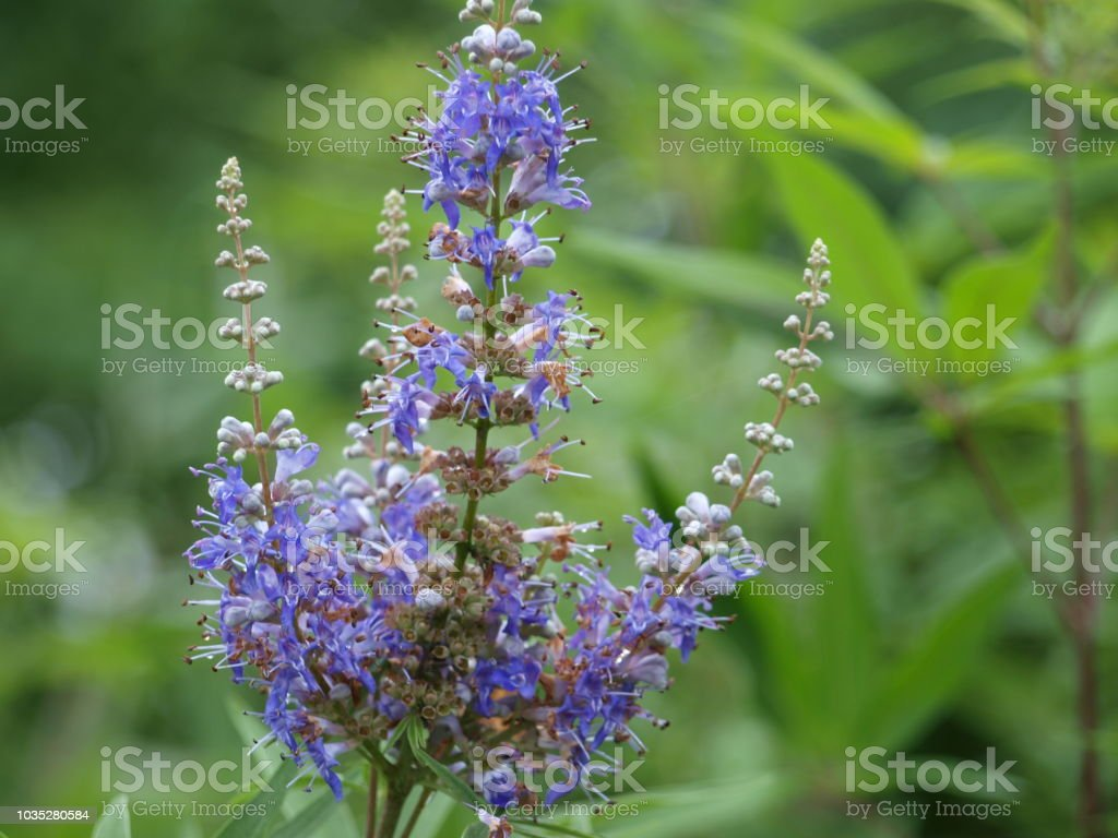 A wetland plant blooms late into the season. stock photo