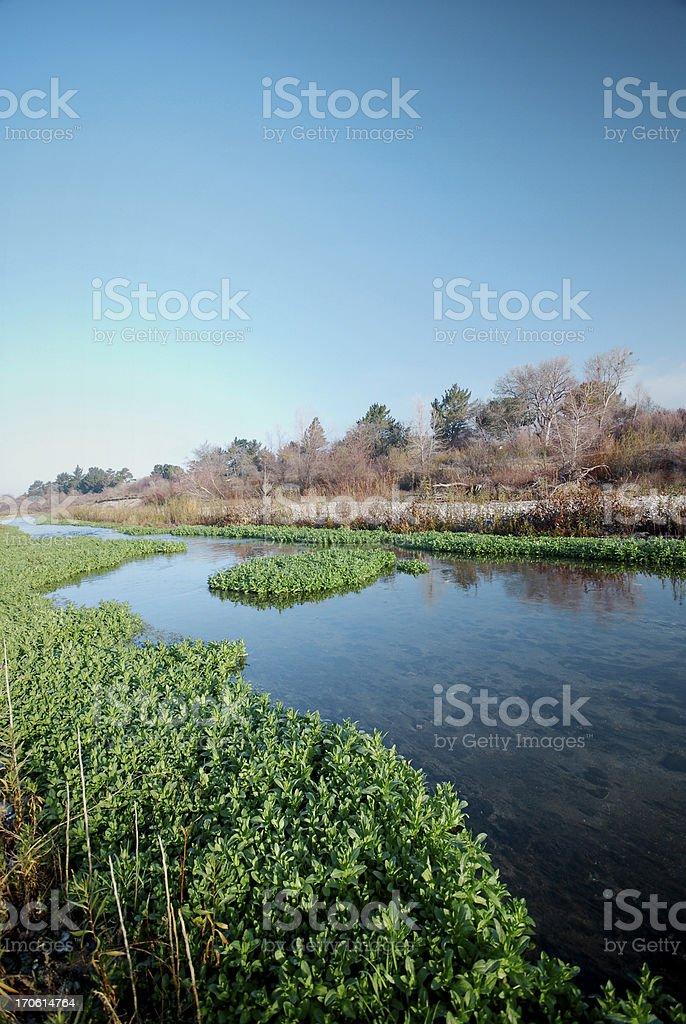 Wetland River royalty-free stock photo