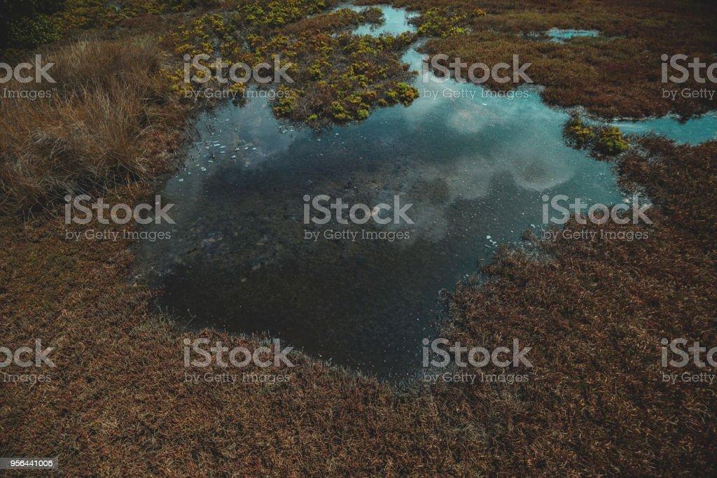Wetland scenery at mudflat, Cronulla stock photo