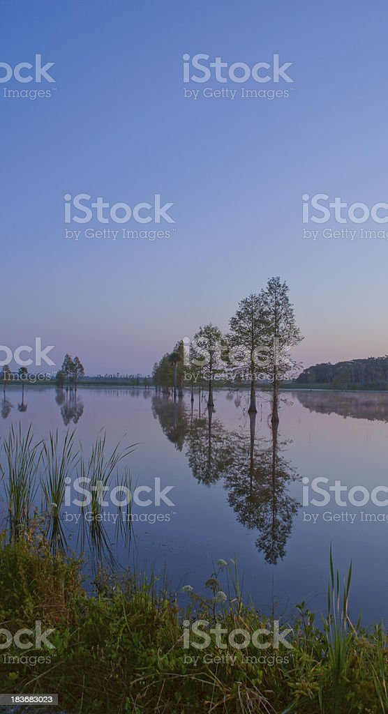 Wetland Sunrise royalty-free stock photo