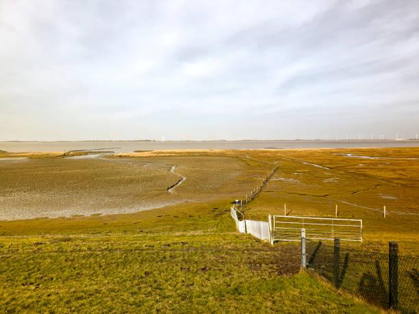 Wetland Wadden sea and Dollard stock photo