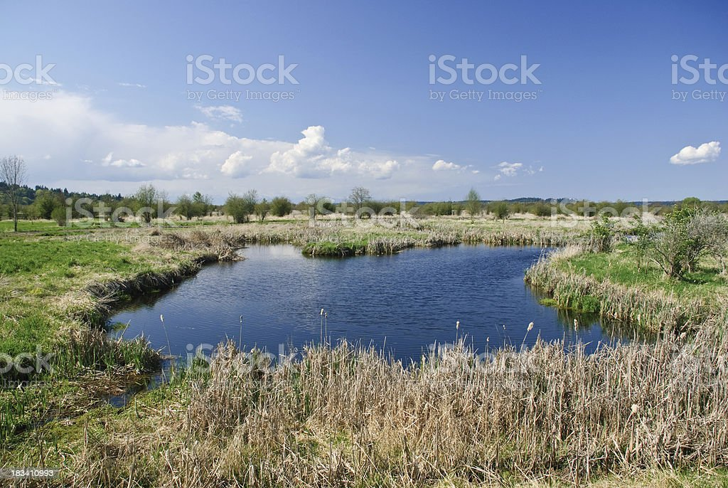 Wetlands and Blue Sky with Clouds royalty-free stock photo