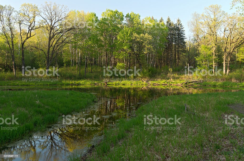Wetlands and Forest of Battle Creek stock photo
