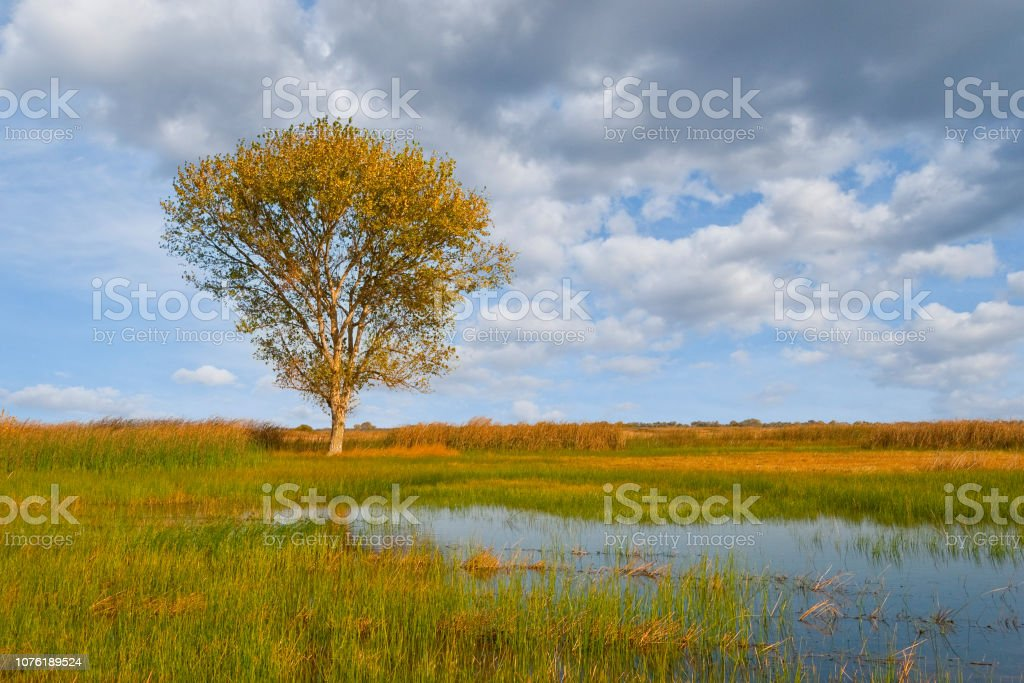 Lone Tree by a Wetland stock photo