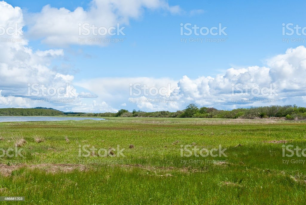 Saltwater Marsh and Puffy Clouds stock photo