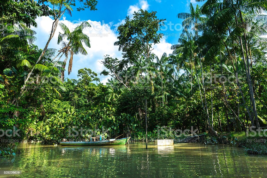 Wetlands in Belem do Para, Brazil stock photo