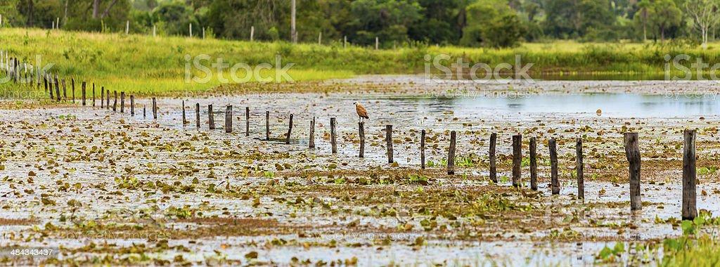 Wetlands in Pantanal, Brazil royalty-free stock photo