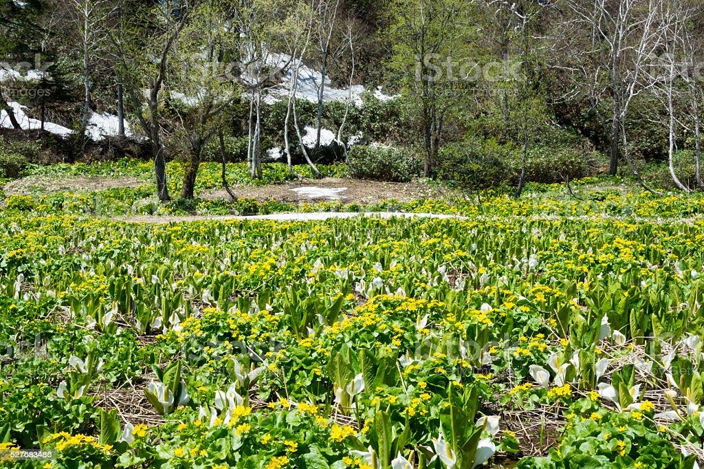 湿地で春 ロイヤリティフリーストックフォト