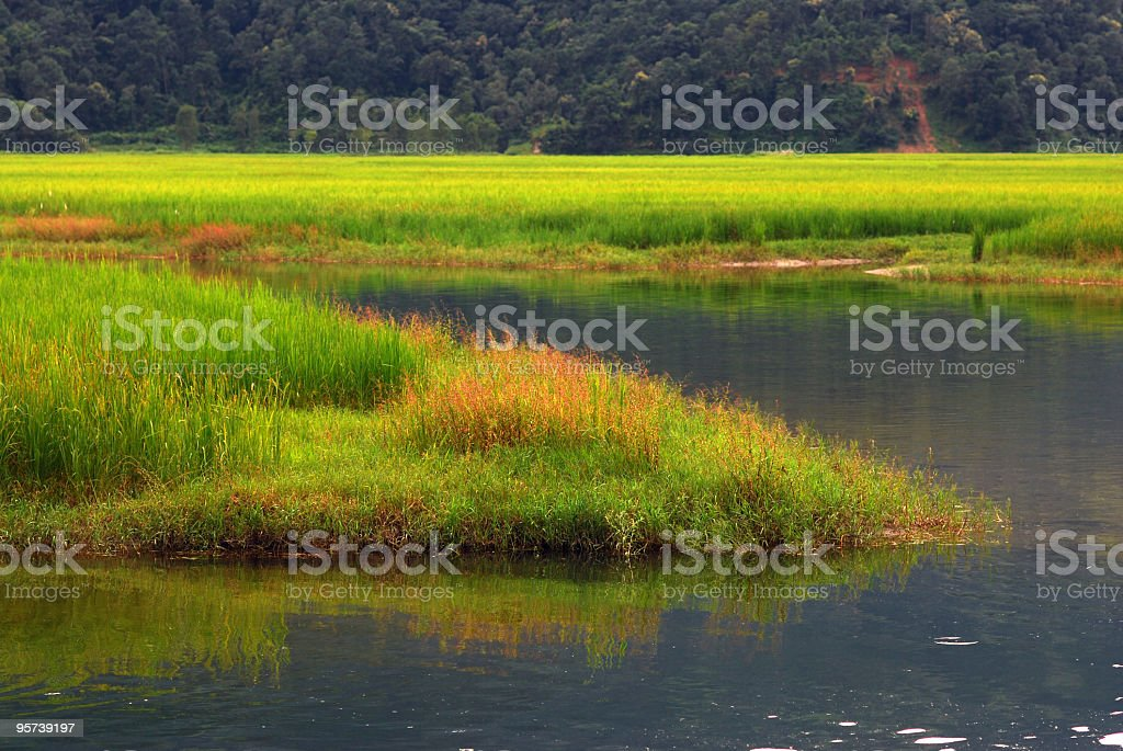 wetlands landscape royalty-free stock photo