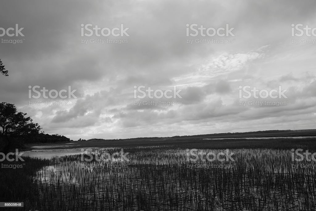 Wetlands Marsh stock photo