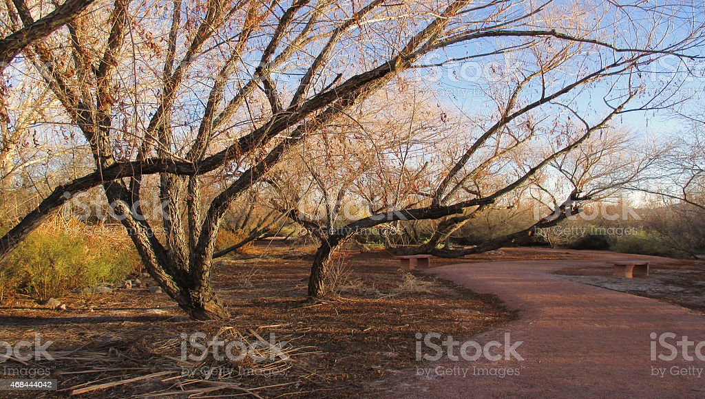 Wetlands Mequiute trees stock photo