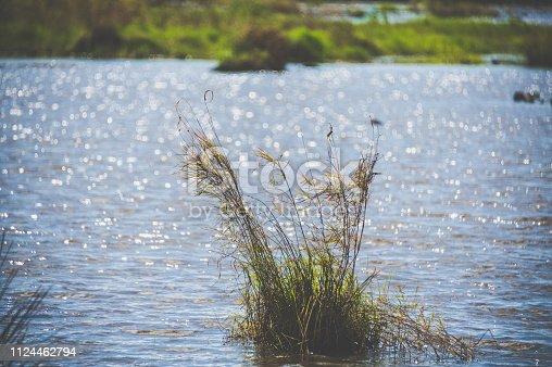 Wetlands in Heilongjiang, China