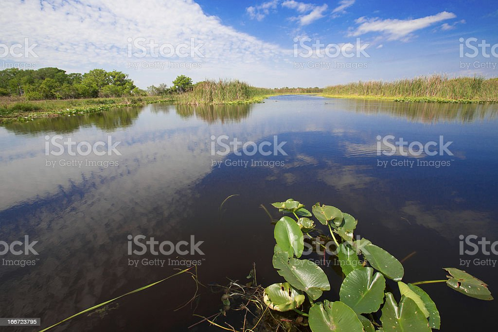 Wetlands royalty-free stock photo