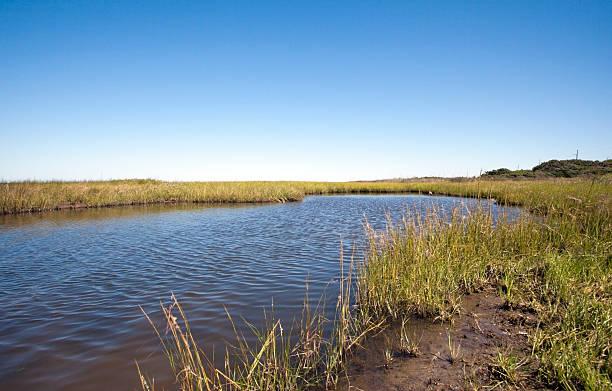 zonas húmidas - estuário imagens e fotografias de stock