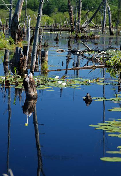 Wetlands swamp stock photo