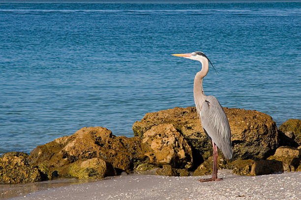 paludi naturale - uccello marino foto e immagini stock