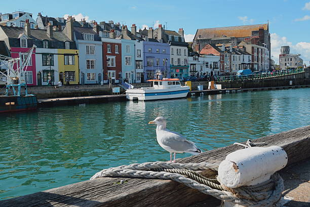 weymouth harbour - weymouth stock photos and pictures