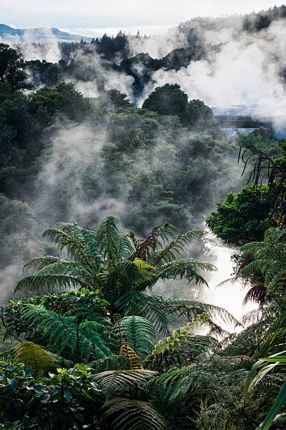 Whakarewarewa Thermal Park in Rotorua, New Zealand Steam through the landscape from the fumarole, geysers and hot springs of Whakarewarewa Thermal Park in Rotorua, New Zealand. whakarewarewa stock pictures, royalty-free photos & images