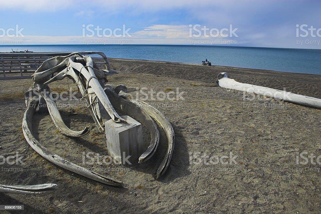 Whale bones stock photo