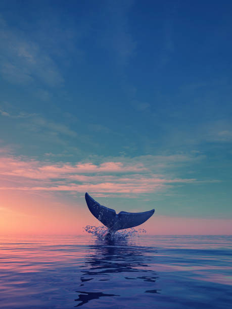 A whale dives at sunset A whale dives at sunset. This is a 3d render illustration whale stock pictures, royalty-free photos & images