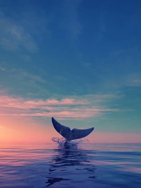 Una ballena se hunde en el ocaso - foto de stock