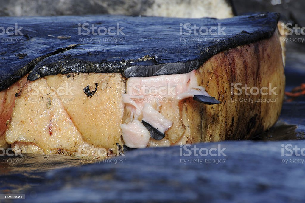 Whale Fin stock photo