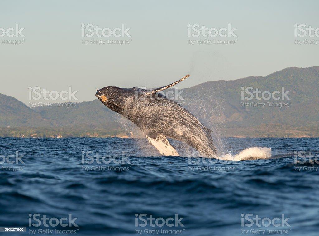 Whale having fun 2 stock photo