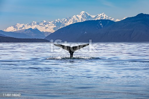 Whale in the ocean with scenic alaskan landscape and mountains