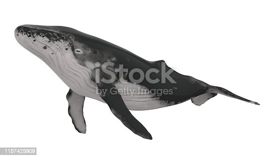 Whale isolated on white background. 3D render