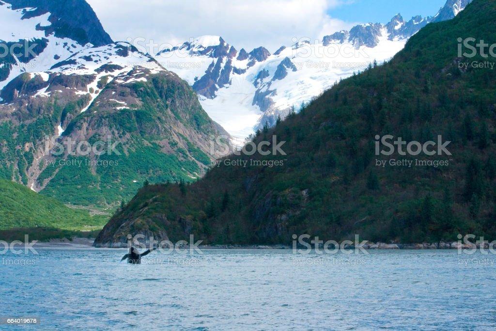 Whale Jumping Alaskan Landscape stock photo