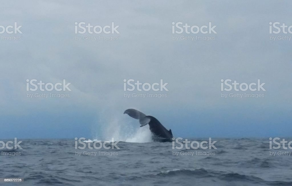 A Whale of a Good Time stock photo