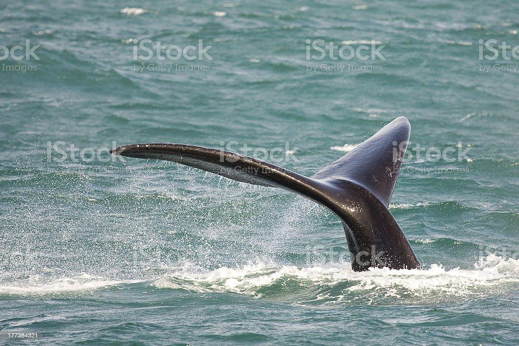 鯨 ロイヤリティフリーストックフォト